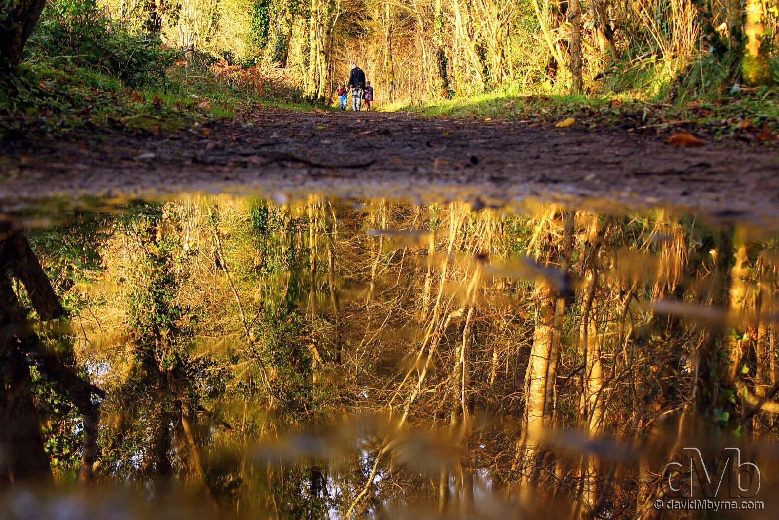 Reflections in Mote Park, County Roscommon, Ireland. November 19th, 2011 (EOS 60D || Tamron 28-75mm || 28mm, 1/60sec, f/3.5, iso100).